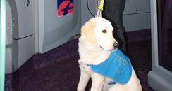 Guide Dog on Bus