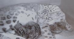 CCTV image of news cubs