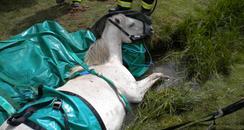 Horse Rescue - Northam