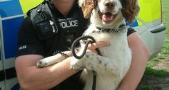 Arnie the Police Dog