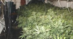 Cannabis find in Milton Keynes