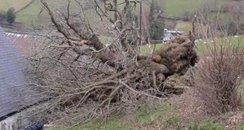 Picture of Pontfadog Oak tree