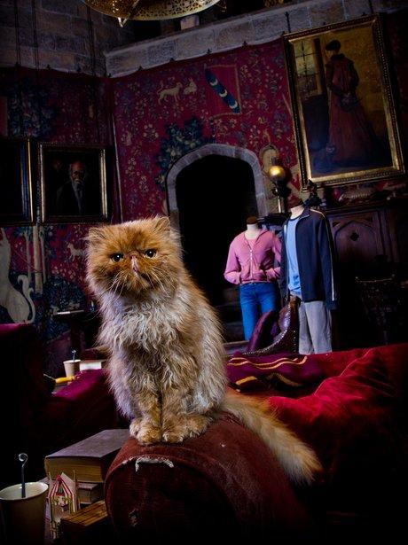 November | 2014 | Cinema Cats  |Harry Potter Hermione And Crookshanks