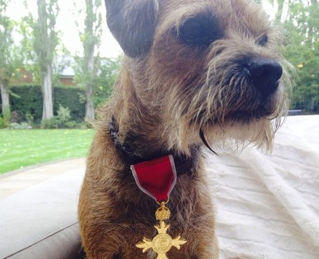 Andy Murray's dog with OBE