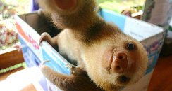 Sloth animal selfie