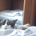 A cat peaking over a bed