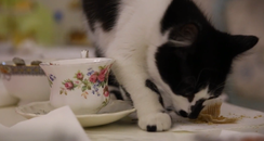 A cat eating cake