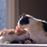 Image 8: Two cats licking each other