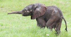 baby elephant west mids