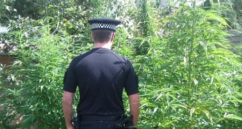 Bournemouth cannabis raid