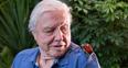 David Attenborugh and a bug