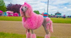 Race for Life Norwich 2015 Sat Dashing Dogs
