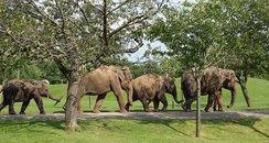 ZSL Whipsnade Zoo promo