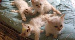 Northampton Burglary Kittens