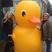 16. Duck Selfie 16