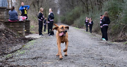 Dog running half marathon