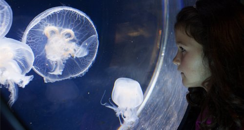 Anglesey Sea Zoo article