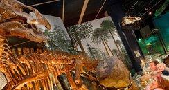 Museum of Cardiff dinosaur